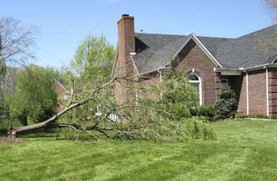 Professional Leaf and Brush removal services for Knoxville and Farragut, TN